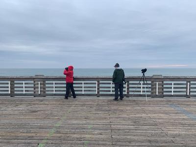 Birding on Jennette's Pier, Nags Head